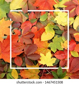 Seasonal autumn background. Frame of colorful maple leaves.