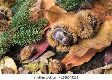 Seasonal Autumn Chestnuts