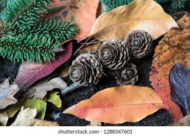 Seasonal autumn pinecones