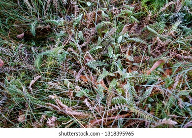 Seasonal background texture of frosty leaves and grass at autumn in Finland.