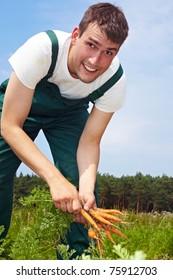 Seasonal farm worker digging up carrots in a field