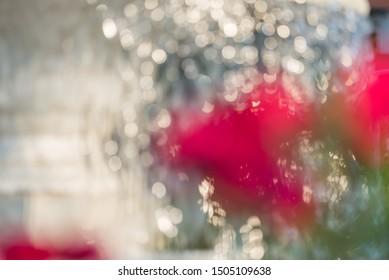 Seasonal garden with beautiful roses