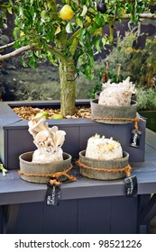 seasonal garden plants and decorative mushrooms
