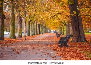 Seasonal landscape, autumn scene with a treelined path in Greenwich park, London