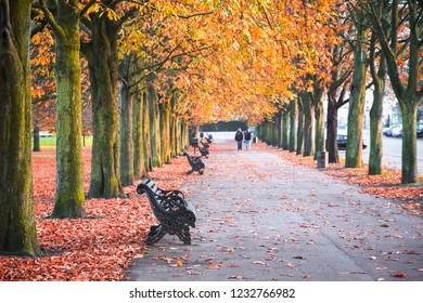 Seasonal landscape, autumn scene in with treelined avenue in Greenwich park, London