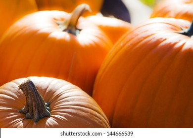 Seasonal Pumpkin Background