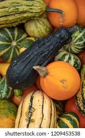 Seasonal Pumpkin, Squash, Courgette and Marrow Collage