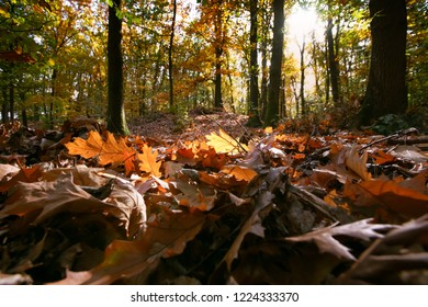 Seasonal scene with densely covered forest land and sun flair and floodlight