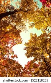 Seasonal travel, retro backdrop and rural environment concept - Beautiful autumn landscape background, vintage nature scene in fall season - Shutterstock ID 1522118255