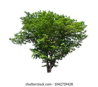 Seasonal tree on white background