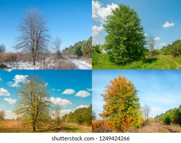 Seasons 4 seasons. View of the pear tree on the edge of the forest near the meadow