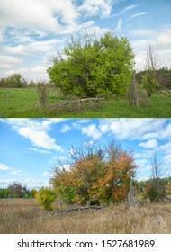 Seasons spring and autumn. View of a meadow with a growing wild pear tree after a windbreak