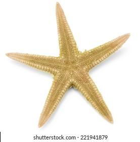 Seastar, isolated on white background.