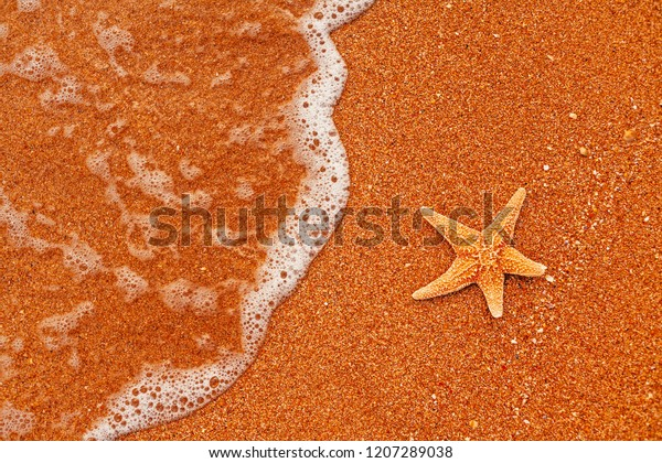 seastar-resting-on-coarse-sand-600w-1207
