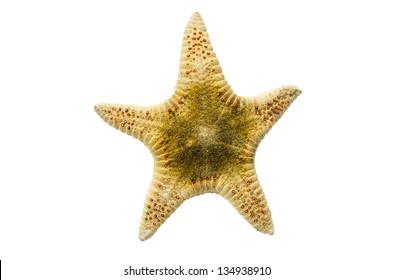 Seastar or Starfish on white background