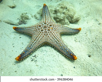 Seastar,ceramic seastar,Yellow spotted seastar,Pentacerastar gracilis,Beautiful color seastar at Maiton Island Phuket,Thailand.