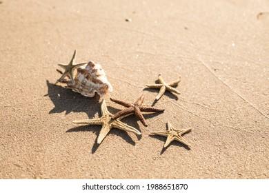 seastars on the sea sand, summer beach background travel concept