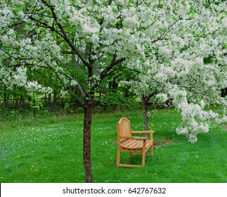 A Seat Among the Blossoms/A photograph of an outdoor bench under two crab apple trees in full white bloom