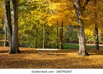 Seat in the park.A sunny day in the autumn.