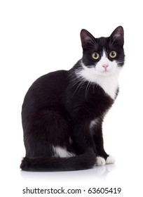 seated cute black and white cat  looking at the camera