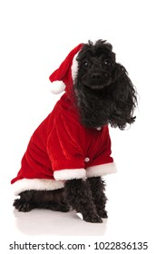 seated santa claus poodle isolated on white background