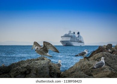 Seated seagulls on large stones and a large ship-ferry on the horizon 1