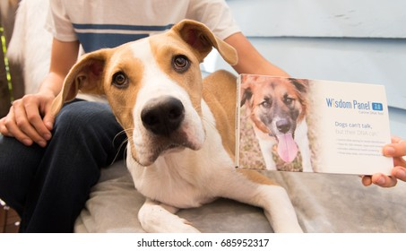 Loyal Dog Images, Stock Photos & Vectors | Shutterstock