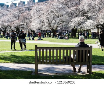 Seattle, USA - March 20, 2018: People enjoying cherry blossoms at the University of Washington campus