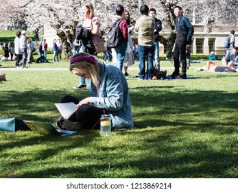 Seattle, USA - March 20, 2018: Female student studying on the lawn at the University of Washington campus during cherry blossom season