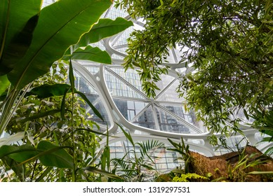 Seattle, Wa circa February 2019 Interior views of the Amazon world headquarters Spheres green house terrariums, many beautiful plants and leaves.