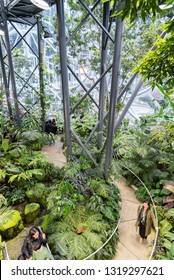 Seattle, Wa circa February 2019 Interior views of the Amazon world headquarters Spheres green house terrariums, overhead view of path through the plants.