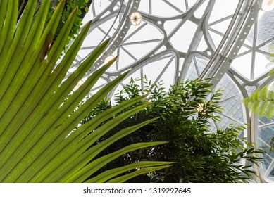 Seattle, Wa circa February 2019 Interior views of the Amazon world headquarters Spheres green house terrariums, large plant leaves under windows.