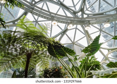 Seattle, Wa circa February 2019 Interior views of the Amazon world headquarters Spheres green house terrariums, looking up with exotic plants.