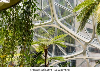 Seattle, Wa circa February 2019 Interior views of the Amazon world headquarters Spheres green house terrariums, beautiful exotic plant life.
