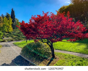 SEATTLE, WASHINGTON, USA - OCTOBER 13, 2018: Fall colors at Seattle Japanese Garden