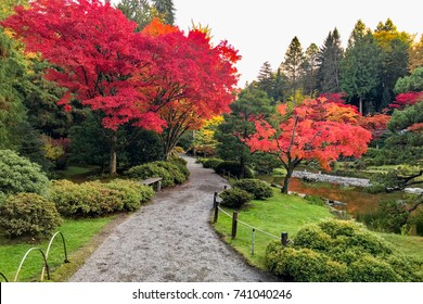 SEATTLE, WASHINGTON, USA - OCTOBER 22, 2017: Fall colors in Japanese Garden near Washington Park Arboretum