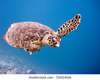 Sea-turtle in the Red Sea
