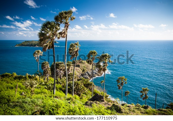 Seaview & palm trees at Promthep Cape in Phuket, southern Thailand