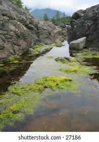 Seawater captured between rocks along a Tofino beach