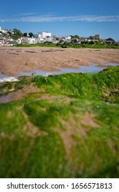 Seaweed covering rocks at low tide, Viking Bay, Broadstairs, Kent, UK with Bleak House and other buildings in background, 5 July 2019