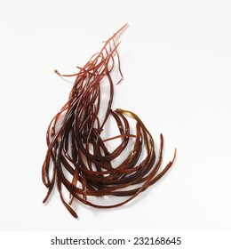 seaweed dumontia contorta