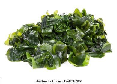 Seaweed Isolated on White Background