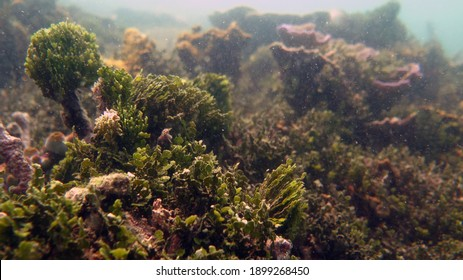 seaweed like an aquascape at lampung selatan