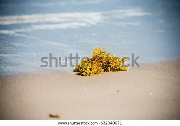 Seaweed on the beach