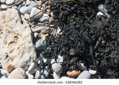 Seaweed and pebbles