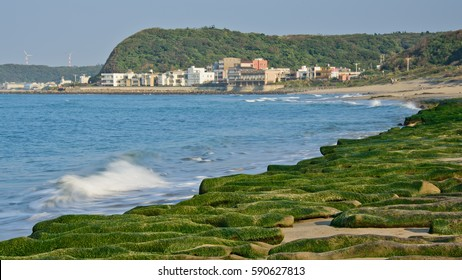 Seaweed rock seashore