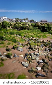 Seaweed and rocks at low tide, Viking Bay, Broadstairs, Kent, UK with pier cafe and Bleak House in background, 5 July 2019
