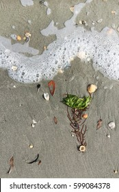 seaweed and shells washed by waves on beach