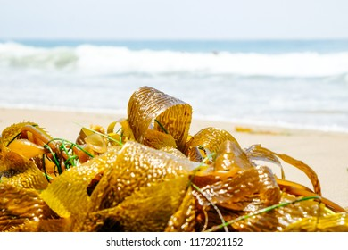 Seaweed sits on the beach as waves crash on a summer day in Malibu, California