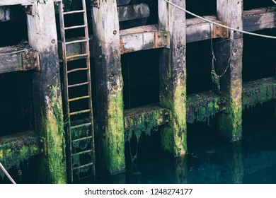 Seaweed slimy dock with ladder